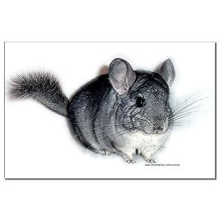 view larger chinchilla poster $ 5 99 qty availability product number