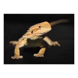 Curious Bearded Dragon Personalized Announcements