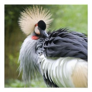 Black Crowned Crane Personalized Invitations