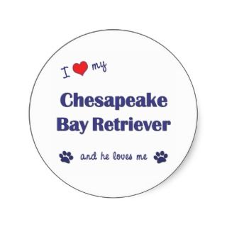 Love My Chesapeake Bay Retriever (Male Dog) Round Sticker