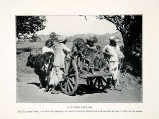 1929 Print Cheetah Hunting Black Buck Sambhur Portrait Animal Cattle