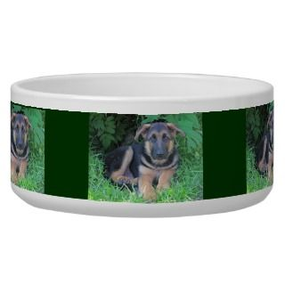 German Shepherd puppy   Dog bowl