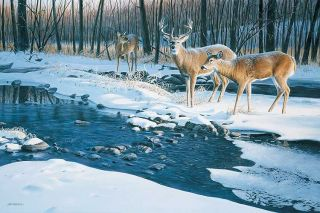 Jim Kasper s N Deer Print Flowing Harmony