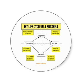 My Life Cycle In A Nutshell (Biological Attitude) Round Sticker