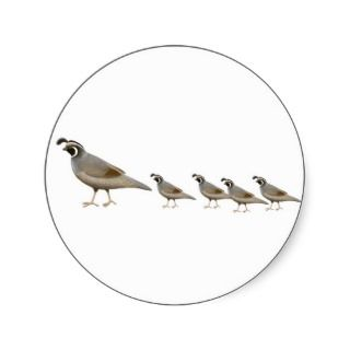 Quail Family Sticker