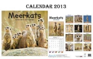 Meerkats Calendar 2013 Free Meerkats Fridge Magnet