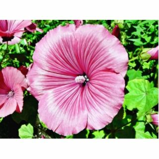 Large Beautiful Flower Photo Cut Out