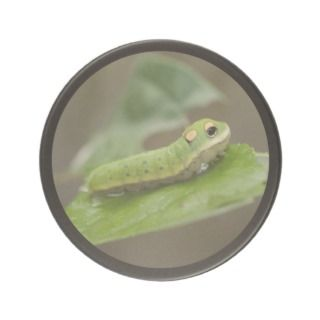 Butterfly Caterpillar Larva Beverage Coasters