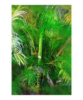Dypsis cabadae Palm tree   Tropical Collection   Palms & Landscape , Miami , FLorida Giclee Print by Palm Images