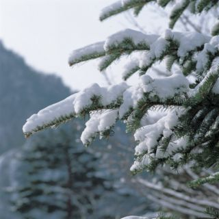 Snow Covered Trees Photographic Print
