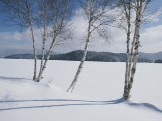 White Birch Trees on the Edge of Snow Covered Lake Placid Photographic Print by Michael Melford
