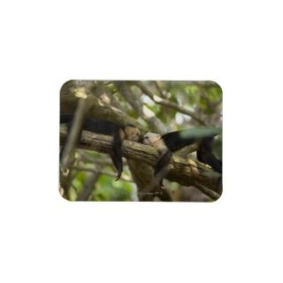 Costa Rica, Two monkeys resting on tree, lying Vinyl Magnets