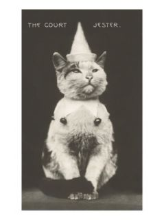 Cat with Pointed Hat, Court Jester Premium Poster