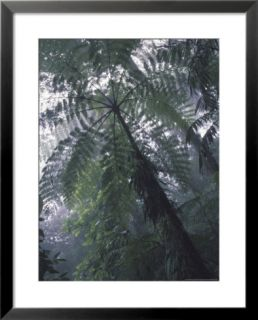 Monteverde Cloud Forest, Costa Rica Pre made Frame