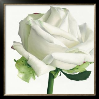 White Rose I Pre made Frame