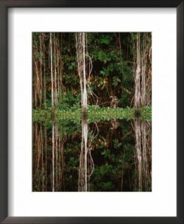 Rainforest Reflected in Still Waters of Canal, Tortuguero National Park, Limon, Costa Rica Pre made Frame