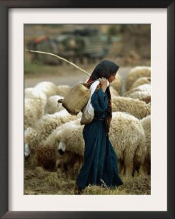 An Iraqi Shepherd, a Young Girl, Herds Her Sheep Framed Photographic Print