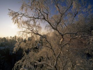 Sunrise Viewed Through Snow and Ice Covered Tree Branches Photographic Print by Norbert Rosing