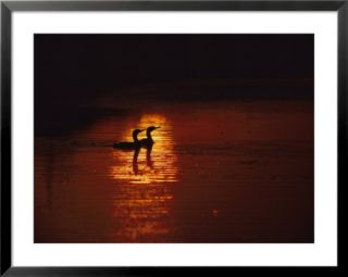 Cormorants Silhouetted in Suns Reflection on the Chesapeake Bay Pre made Frame