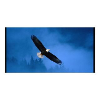 Flight of Freedom Bald Eagle Photo Cards