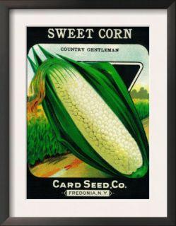 Sweet Corn Seed Packet Prints