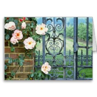 white Rose And Wrought Iron Gate flowers Cards