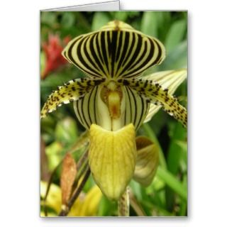 Yellow Zebra Stripes Orchid Greeting Cards