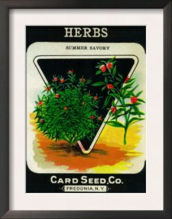 Herbs Seed Packet Prints