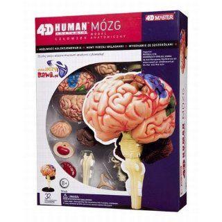 Human Brain Anatomy Model 4D Puzzle   Gehirnmodell Puzzle