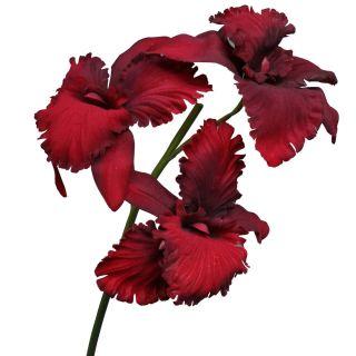 Cattleya Orchidee Samt/Velvet 75cm bordeaux rot Kunstblumen künstlich
