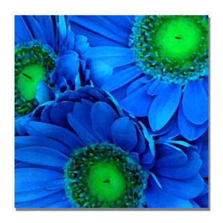Amy Vangsgard Blue Gerber Daisies Canvas Art
