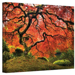 John Black  Japanese Tree  Gallery Wrapped Canvas