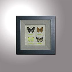 Butterfly Shadow Box (Set of 2)