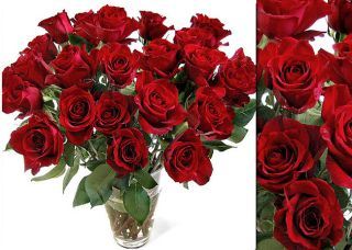 100 Fresh Red Wholesale Roses (20 in stem length)