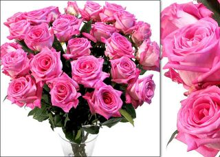 200 Hot Pink Wholesale Roses (18 in. stem length)