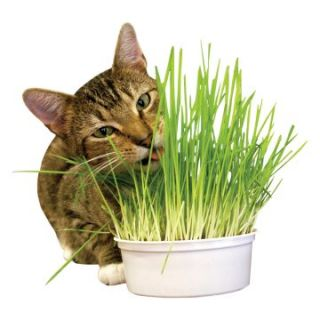 Healthy Greens Easy Grow Oat Kit   Cat Food & Treats