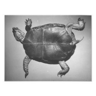Riesige Schildkröte, an zurück umgedreht Fotos